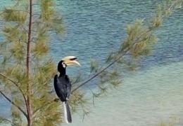 bird_watching2.jpg