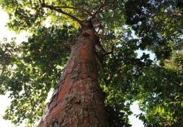 nature_big_tree.jpg