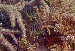 photo-fish1.jpg